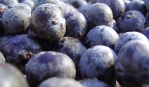 maqui-berry-benefitspg