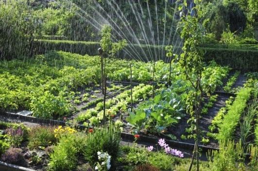 healthy-garden_tn